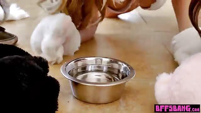 Cute pussycats share a big black cock